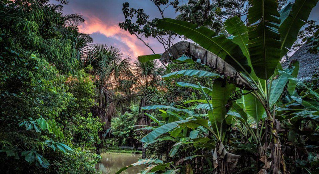A Mind-Blowing Journey Into The Jungle For The Sacred, Life-Altering Ayahuasca Psychedelic