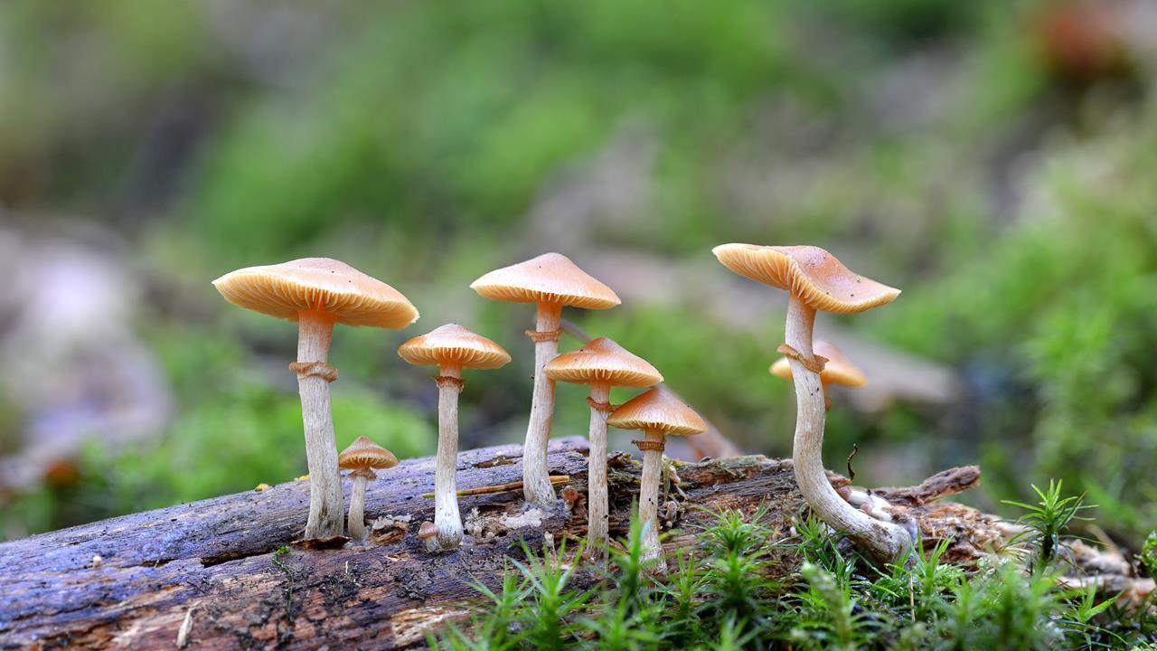 Beautiful Mushrooms