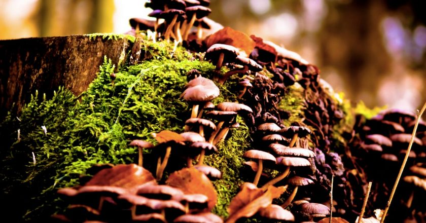 Scientists Studied What Mushrooms do to The Brain And Its Not What You've Been Told