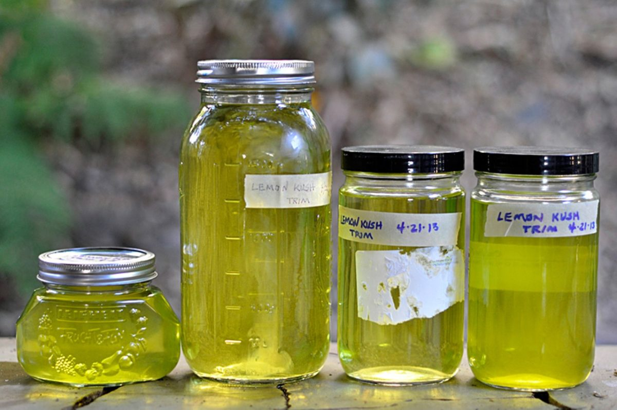 ODOFREDO VASQUEZ – Cannabis oil, which cancer-sufferers credit with saving their lives, and which is supposedly useful in healing other ailments, from diabetes to skin rashes, is made by distilling raw bud down to its essential ingredients.