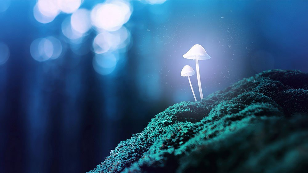 11 Odd Facts About 'Magic' Mushrooms