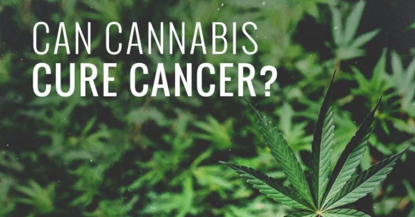 Cannabis Cured Cancer