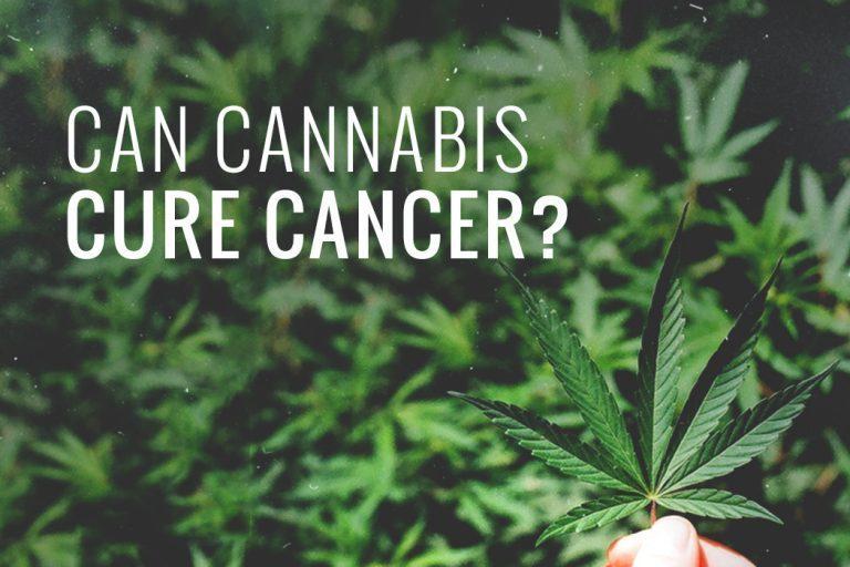 Cannabis Cured Cancer