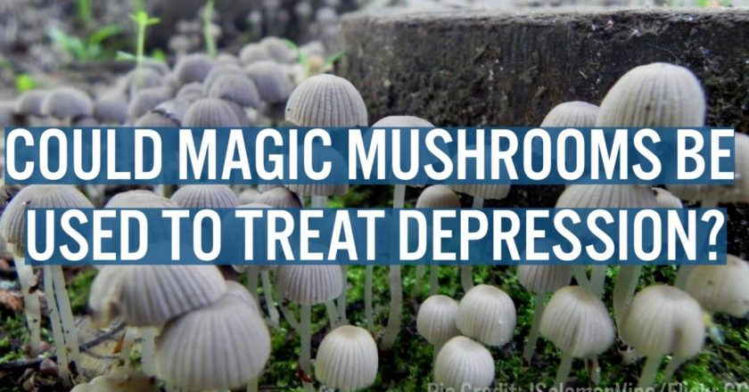Psychedelic Mushrooms for Depression