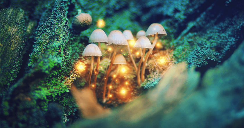 "It Isn't Hippie Talk – Science Proves ""Magic"" Mushrooms Expand Your Mind"
