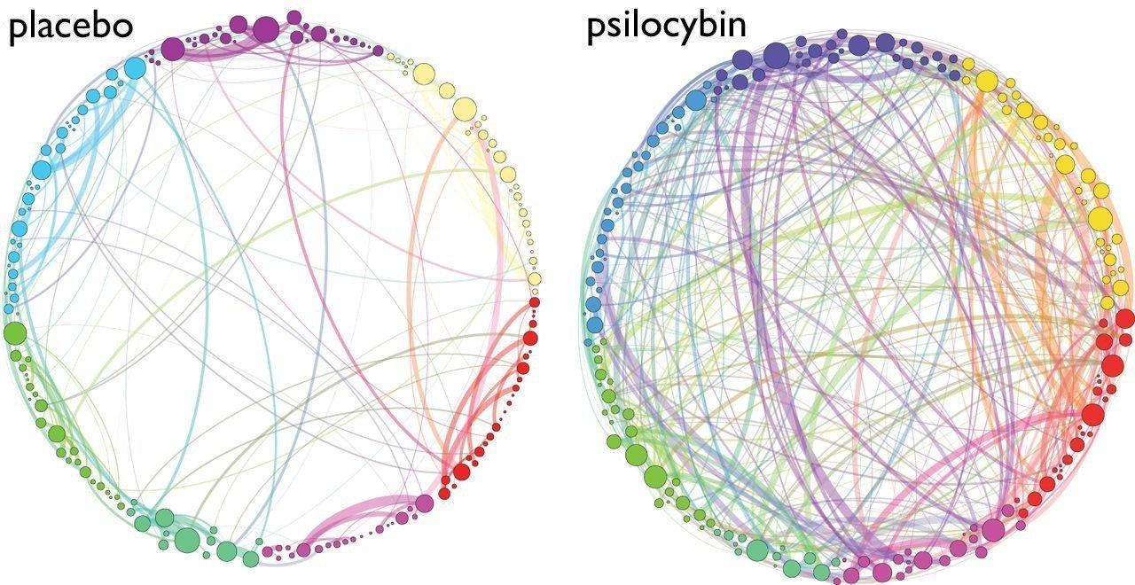 Brain networks on and off Psilocybin (Magic Mushrooms)