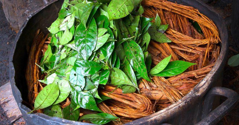 Psychoactive Plant May Hold Key to Reversing Diabetes
