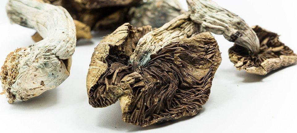 "Single Dose Of ""Magic"" Mushrooms May Improve Personality Permanently"