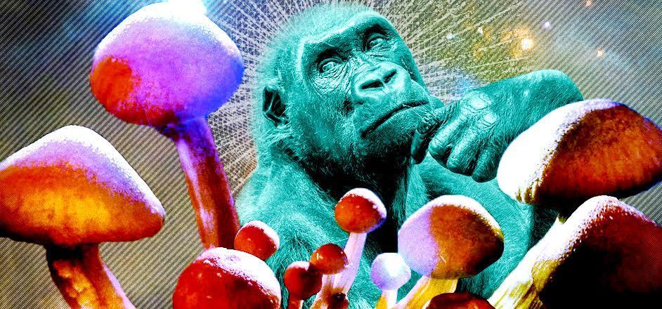Stoned Ape Theory and Magic Mushrooms