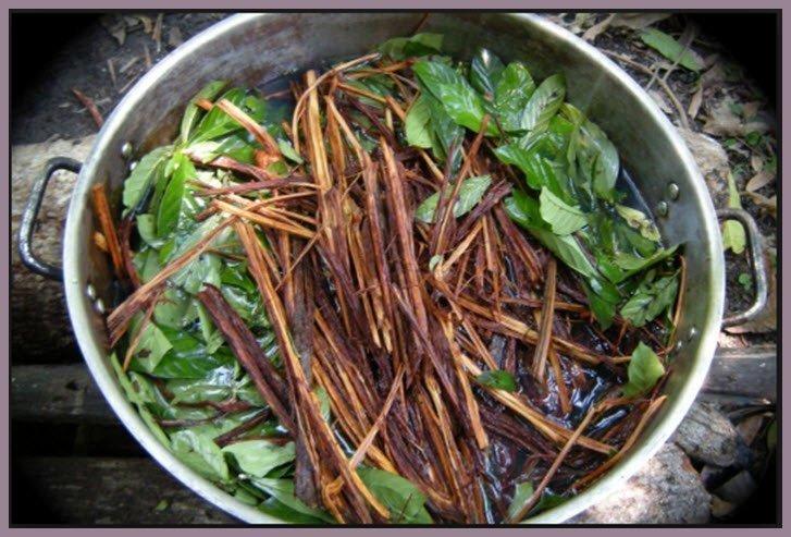 Ayahuasca is a 'tea' made from Amazonian plants. (Jairo Galvis Henao/Creative Commons)