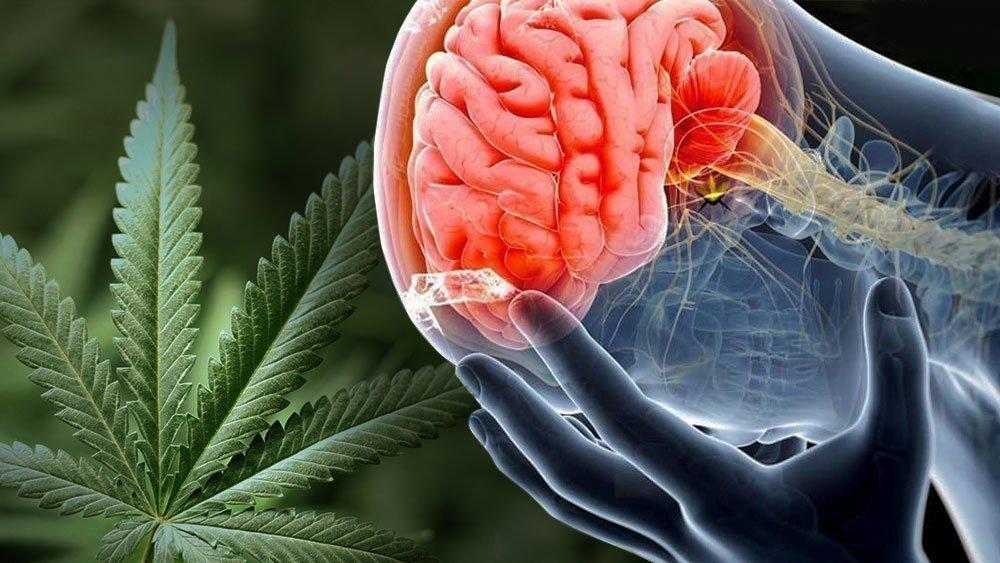 Why Smoking Pot Feels So Good: New Neuroscience Explains Marijuana And The Brain