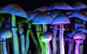 Magic Mushrooms Can Improve Psychological Health Long Term