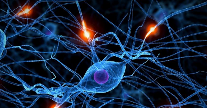 Ayahuasca stimulates the birth of new brain cells