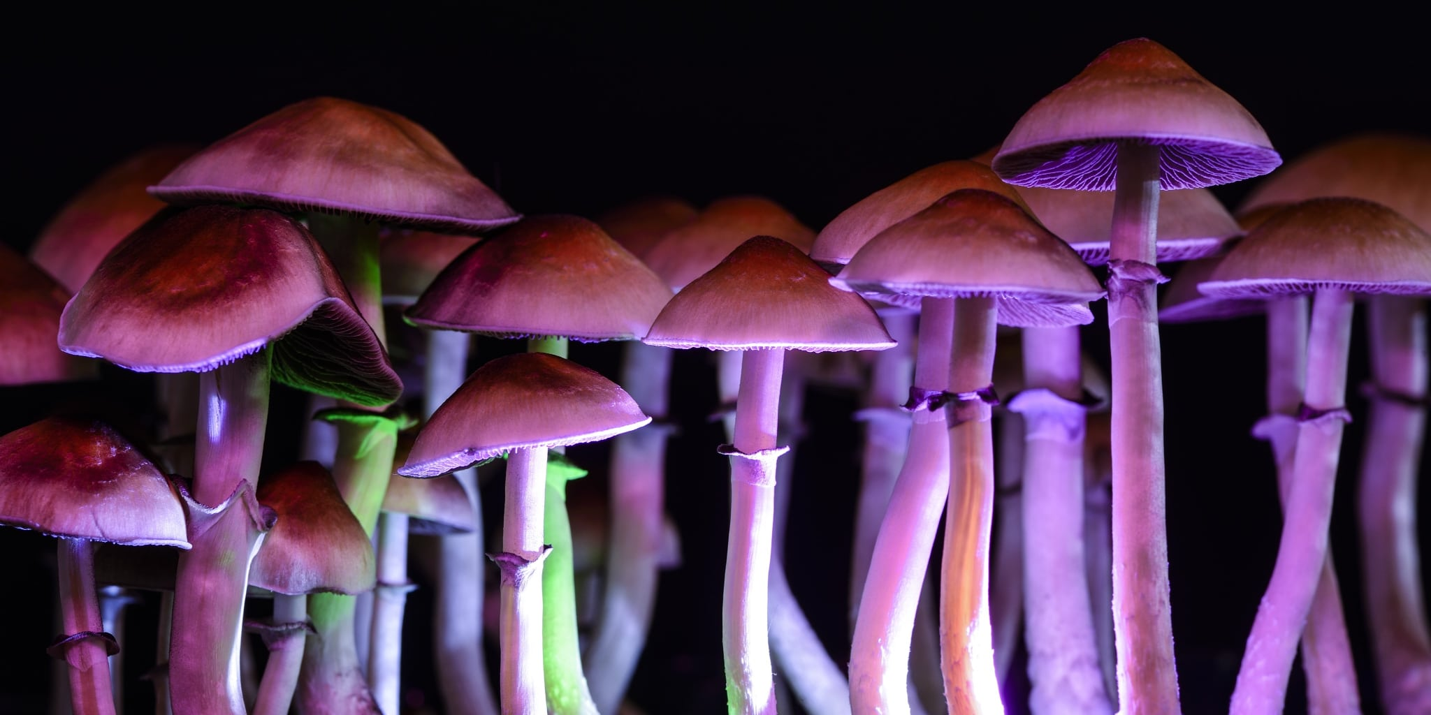 Considering The Positive Uses of Psychedelic Mushrooms
