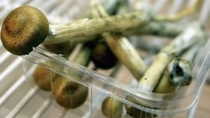 Denver Becomes First US City to Decriminalise Magic Mushrooms