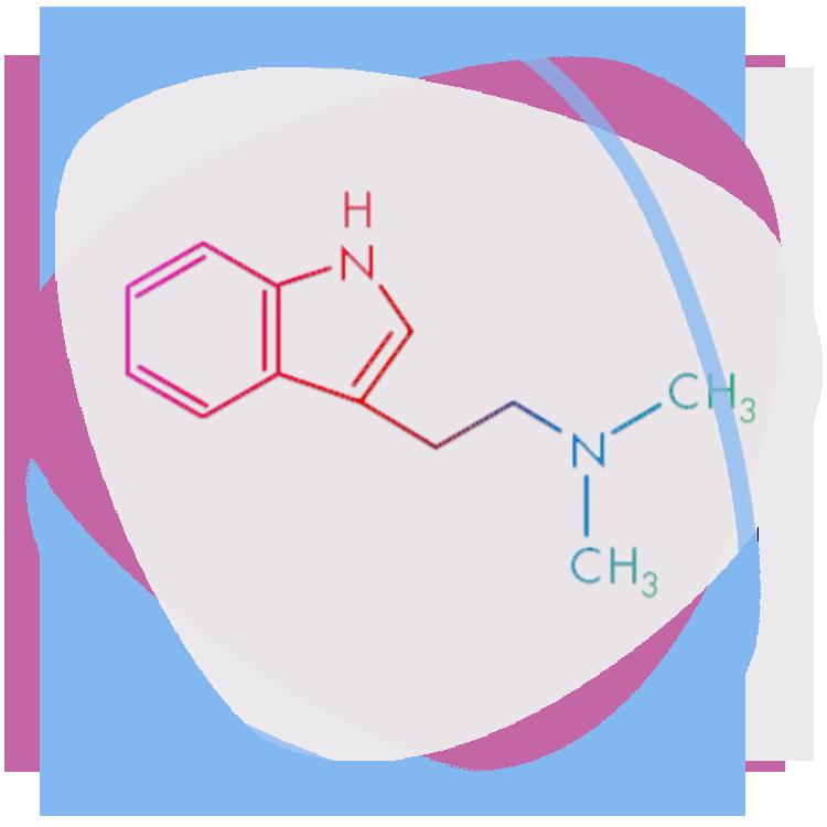 Spirit Molecule - Psychedelics (DMT)