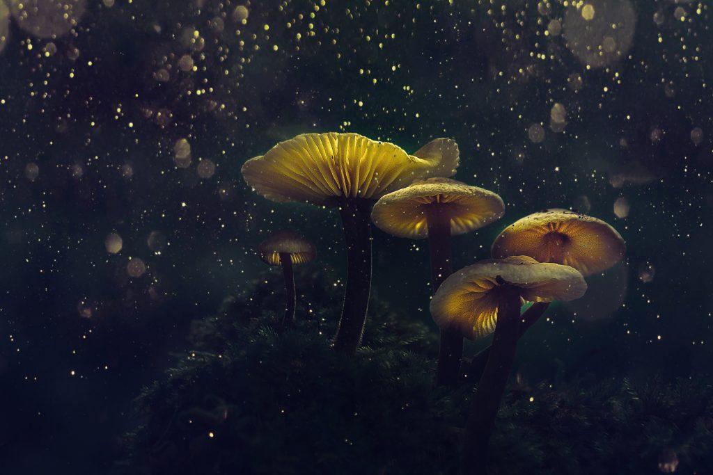Spirit Molecule - Psilocybin Mushroom