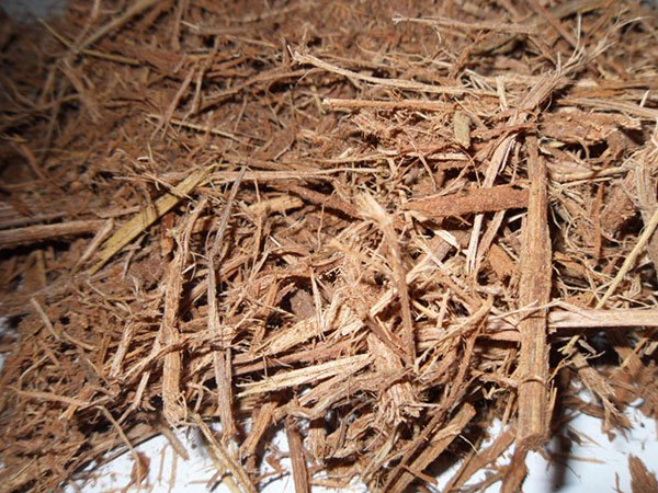 Banisteriopsis - Shredded Ayahuasca Vine