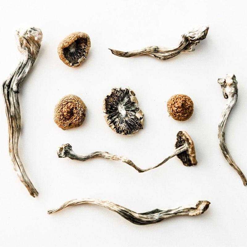 Spirit Molecule - Mushroom Cultivation Course